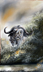 Ania - Cape Buffalo Peril