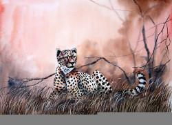 Aswani - Hungry Cheetah
