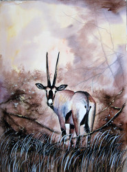 Aswani - Oryx in Tall Grass