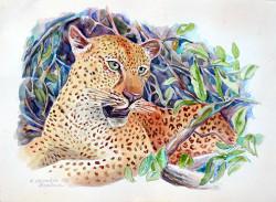 Chiocchia - Hiding Leopard