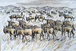 Mbatia - Wildebeast Migration
