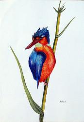 Muthonik - Kiingfisher