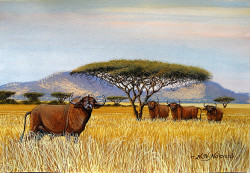Ndeveni - Cape Buffalos in the Savannah