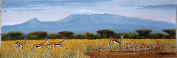 Ndeveni - Thompson Gazelles Near Kili