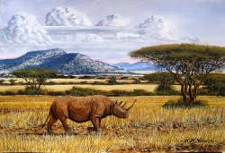 Ndeveni - Wandering Rhino