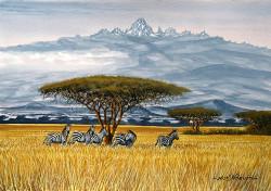 Ndeveni - Zebras Near Mt. Kenya