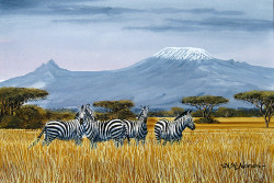 Ndeveni - Zebras at Amboseli and Mt