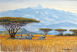 Ndeveni - Zebras on the Plains Near Mt Kenya