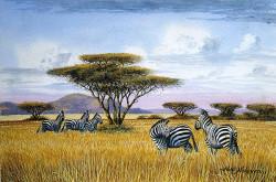 Ndeveni - Zebras1