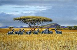 Ndeveni - Zebras2