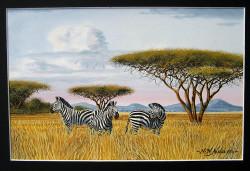 Ndeveni - Zebras4 w matte