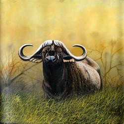 Ndwiga - Cape Buffalo in Tall Grass