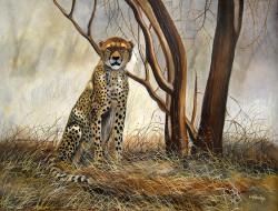 Ndwiga - Hungry Cheetah