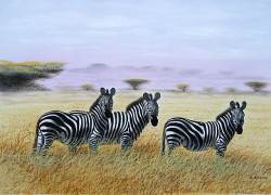 Ndwiga - Zebras on the Plains