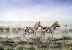 Ngoko - Baby Zebra Pair