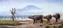 Ngoko - Cape Buffalo on the March