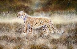 Ngoko - Cheetah Cub