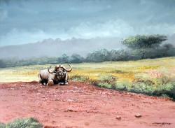 Njoroge---Lone-Cape-Buffalo