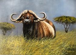 ndwiga-grassland buffalo