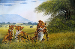 wanjeri-cheetah family
