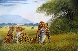 wanjeri-cheetah family