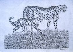 Obanda - Cheetah Mother and Child
