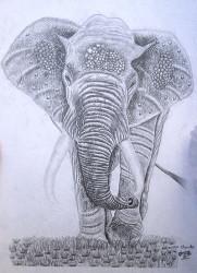 Obanda - Elephant