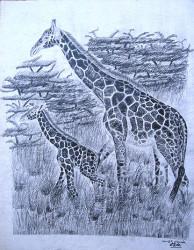 Obanda - Giraffes
