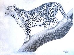 Obanda - Leopard