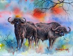 Thiongo-Cape Buffalo