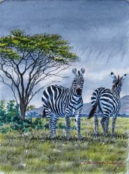 Thiongo - Zebra Pair